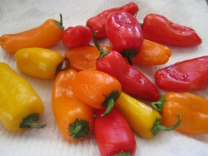 Mini- Peppers