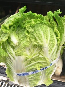 Nappa Cabbage