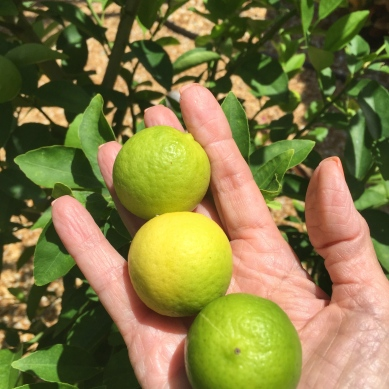 Fresh Key Limes